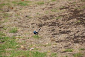 Australien Blue Lake
