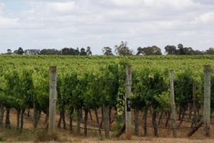 coonawarra australia wine