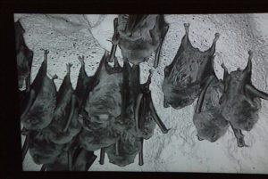 naracoorte bat cave