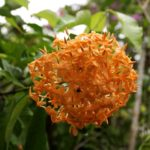 Paronella Park Blumen