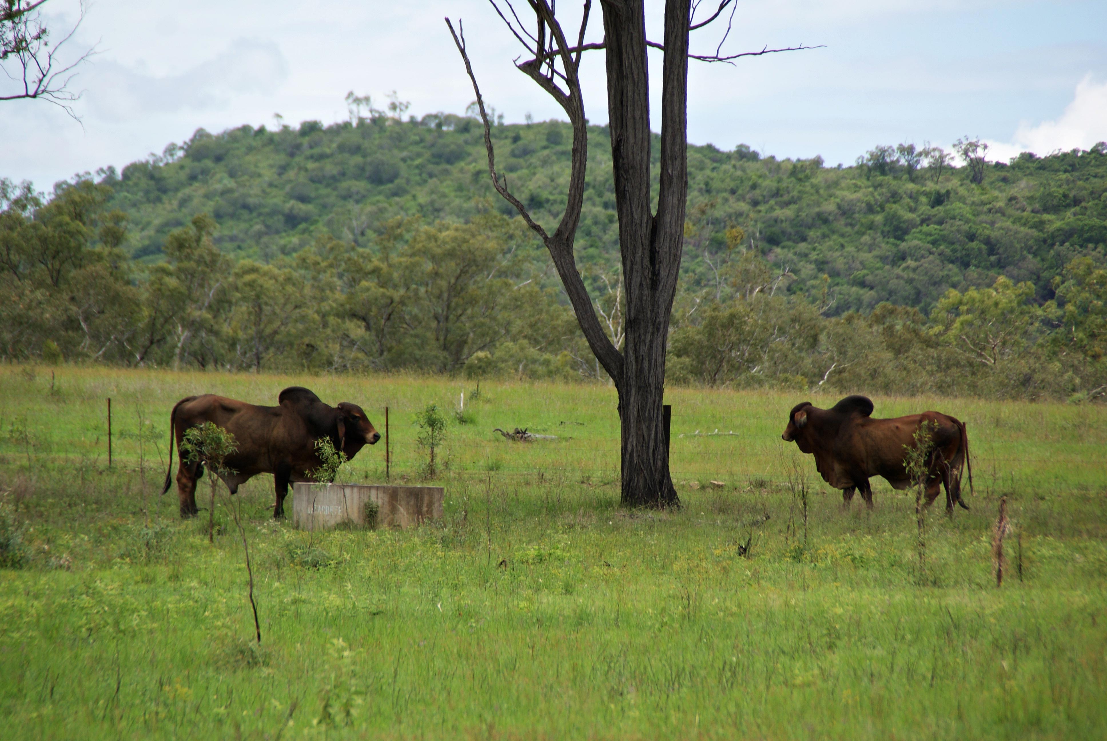 Australien Rockhampton