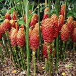 Australien Pflanzen