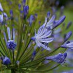 England Gaerten Blumen