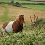 England Cornwall Pferde Reiten