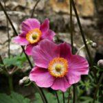 Cornwall Blumen