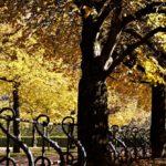 Muenchen Hofgarten