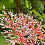 Eureka Garten Pflanze