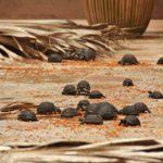 Mauritius Schildkroeten