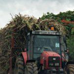 Zuckerrohr Ernte