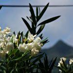 Garten Pflanze Berg