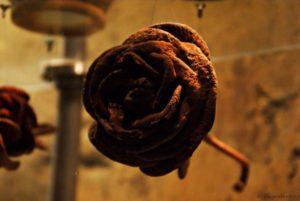 Karlsbad Rose