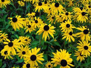 Johannesweg Blumen
