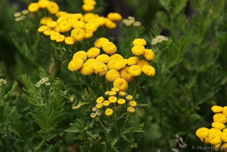 Ätna Pflanzen