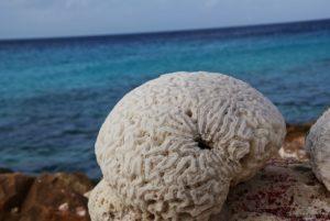 Bonaire Korallen