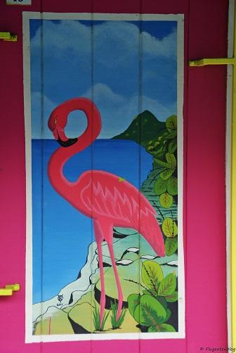 Bonaire Flamingo