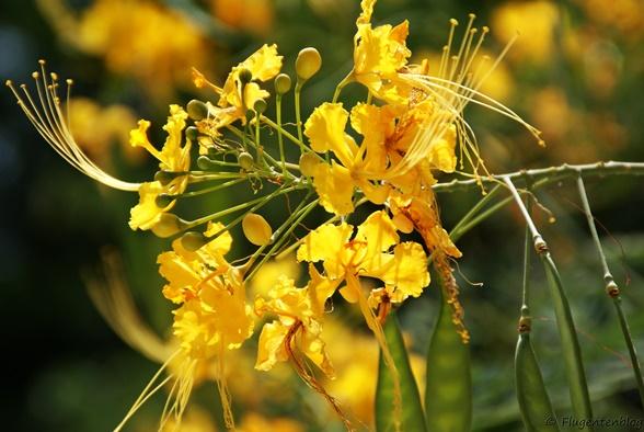 Christoffelpark Curacao Blumen