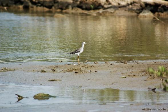 Curacao Vogelwelt