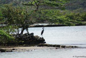 Curacao Salzgewinnung