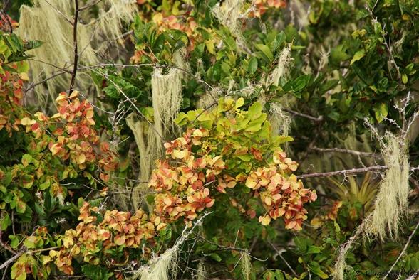 Curacao Pflanzen