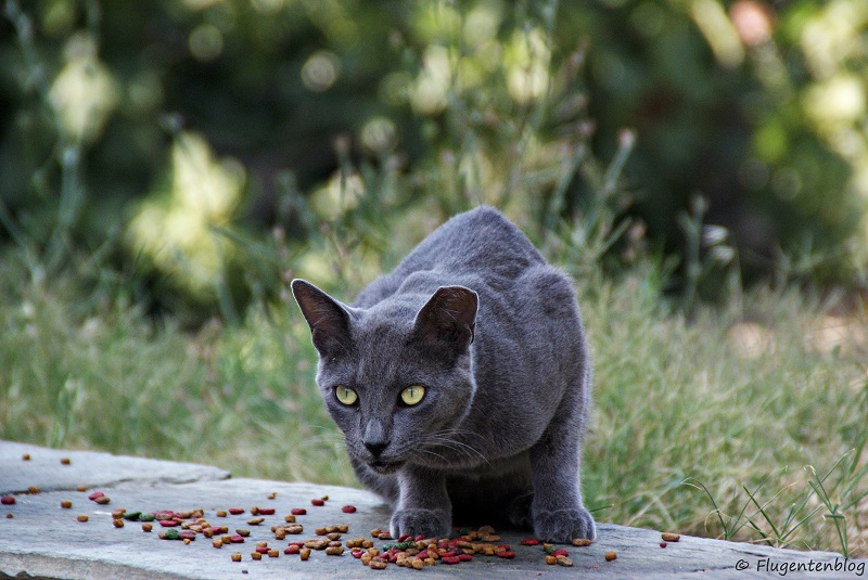 Griechenland Katzen Skiathos