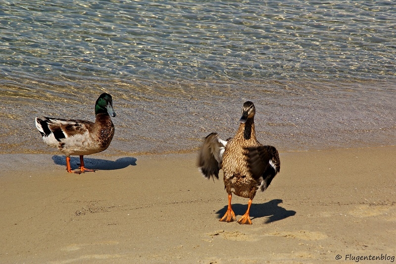 Skiathos Koukounaries Beach