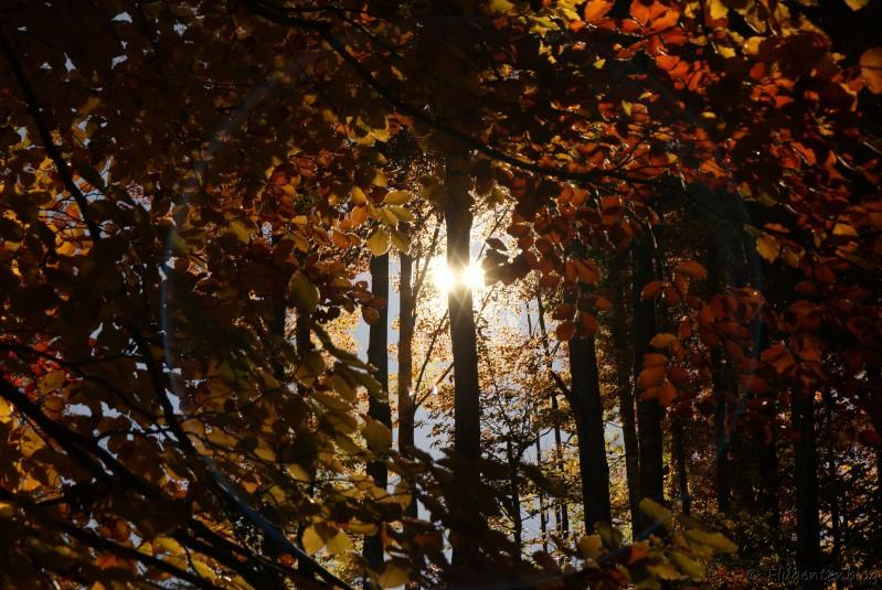 Herbst Licht Wald
