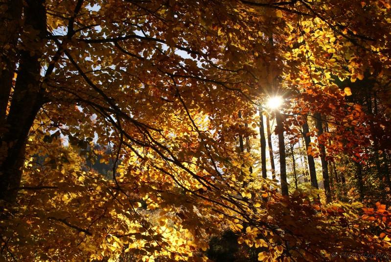 Herbstlicher Wald Sonnenschein