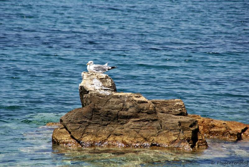 Griechenland Skopelos Loutraki Moewe