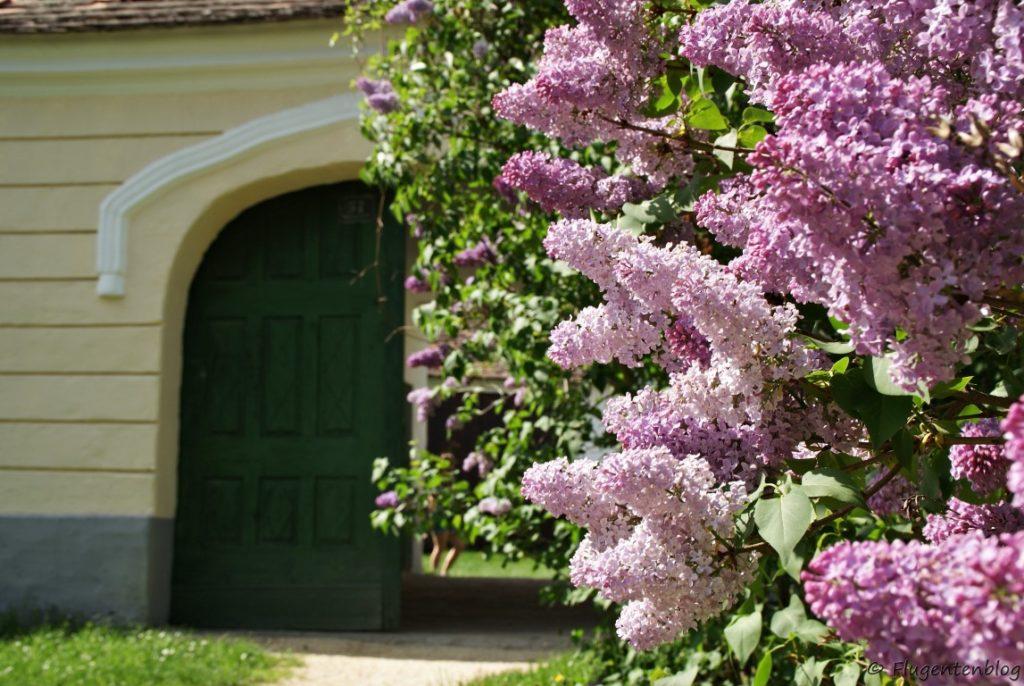 Museumsfruehling Niederoesterreich Weinviertel Niedersulz