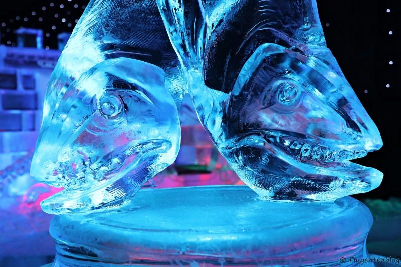 zwei Fischkoepfe aus Eis