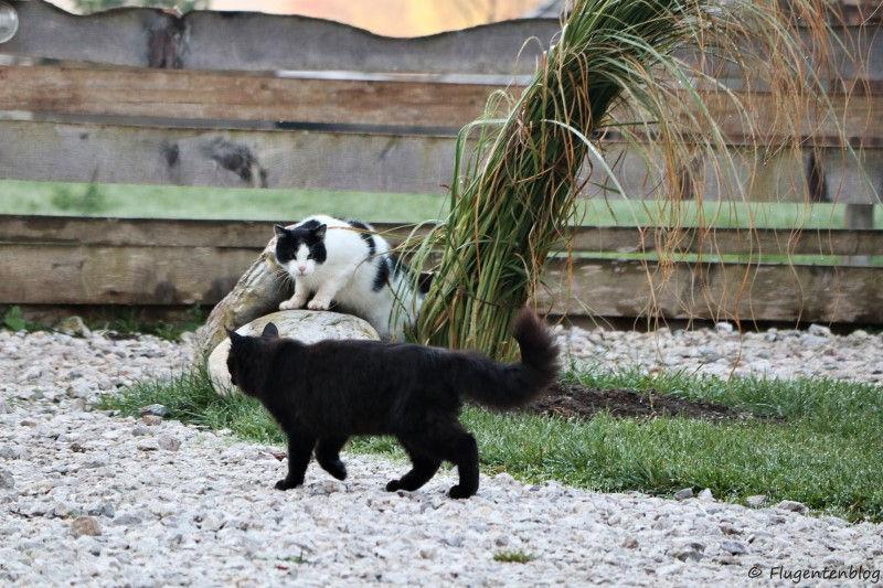 zwei Resort-Katzen
