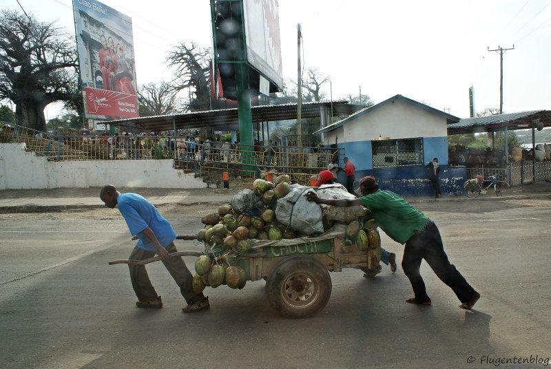 Maenner schieben einen schweren Anhaenger mit Kokosnuessen