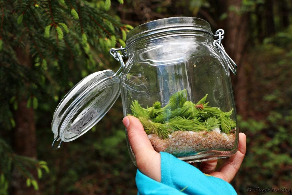 gruene Zapfen auf braunem Zucker im Einmachglas