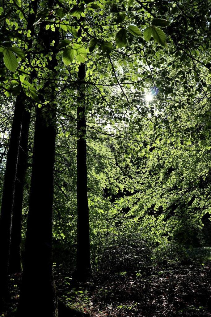 vier baeume und viele Baumblaetter die Sonne strahlt