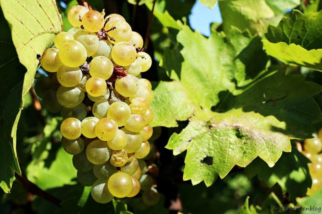 Weinviertel Weingaerten
