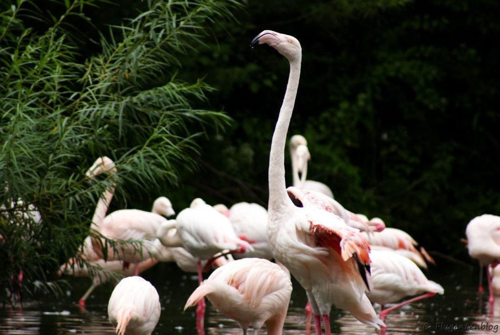 Salzburg Flamingos